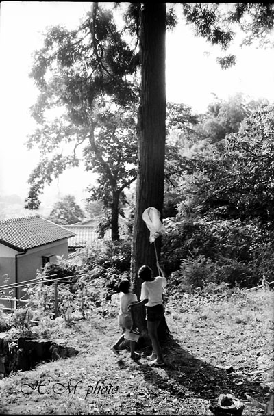 19860810_昆虫採集_01.jpg