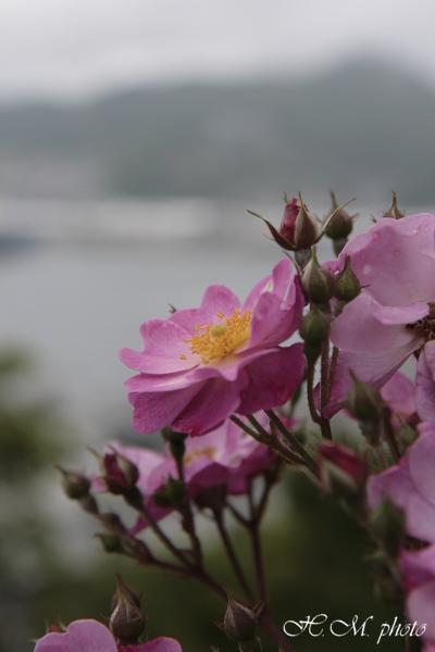 2008_グラバー園(花)_02.jpg