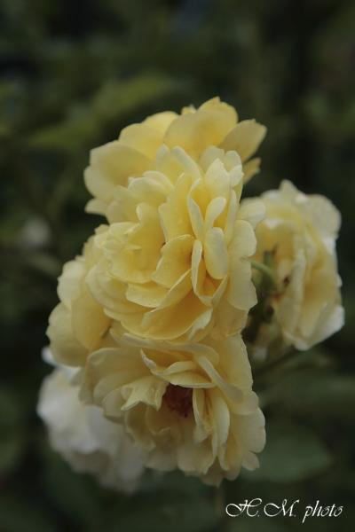2008_グラバー園(花)_03.jpg