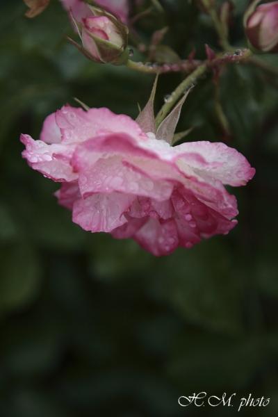 2008_グラバー園(花)_04.jpg