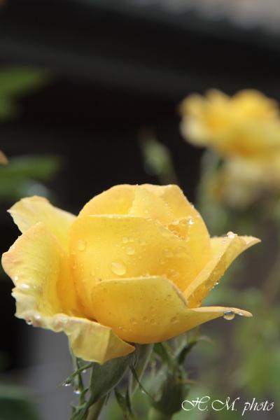 2008_グラバー園(花)_05.jpg