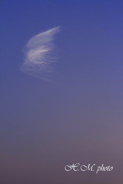 2008_天使の翼_01.jpg