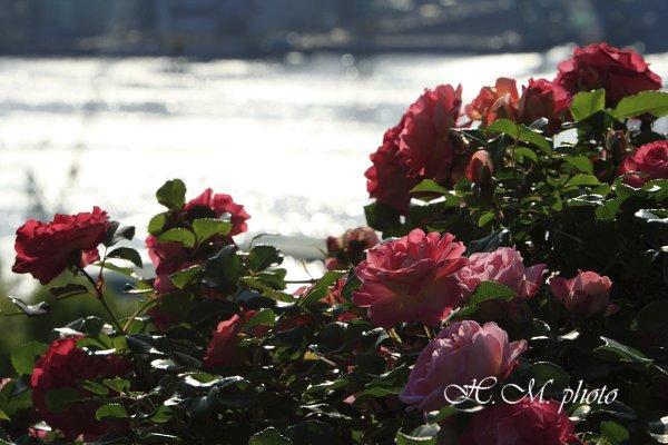 2009_グラバー園の陽光_04.jpg
