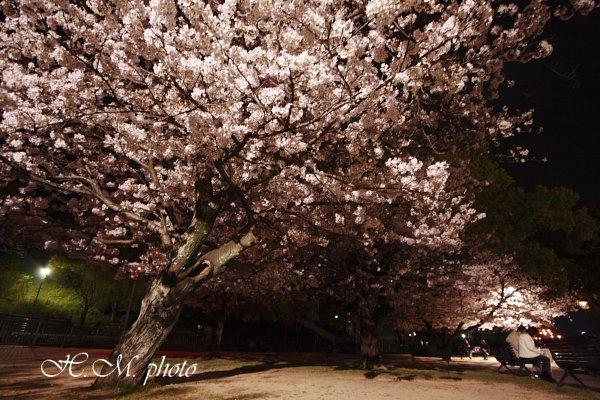 2009_原爆公園の夜桜_01.jpg