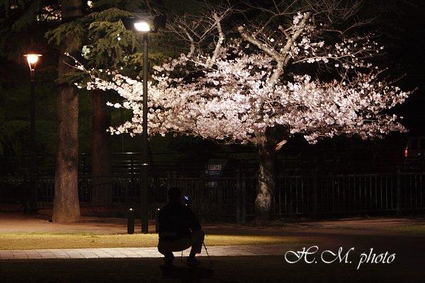2009_原爆公園の夜桜_06.jpg