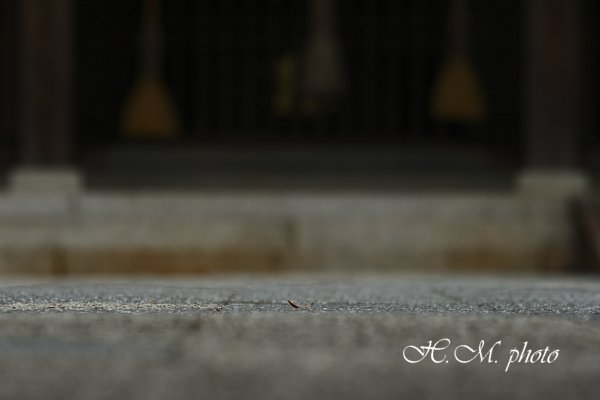2009_橘神社_03.jpg