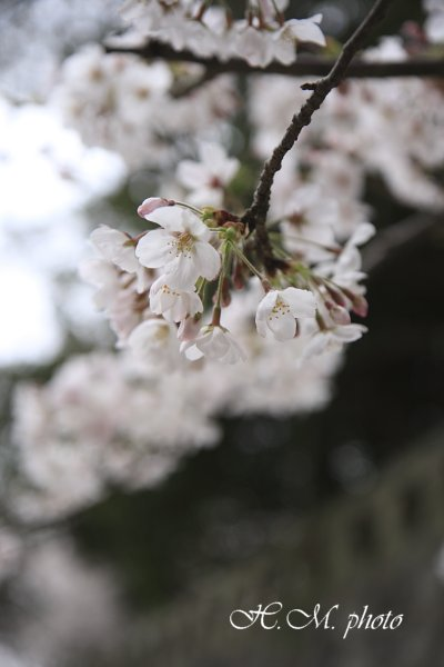 2009_江浦神社_06.jpg