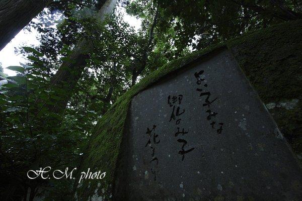 2009_滝の観音2_04.jpg