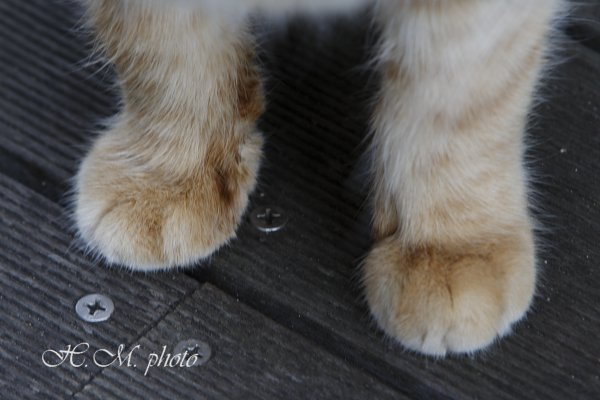 2009_猫ホテル_01.jpg