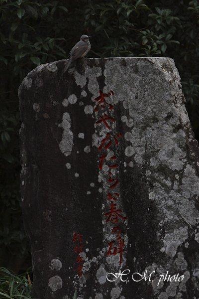 2009_聖福寺_07.jpg