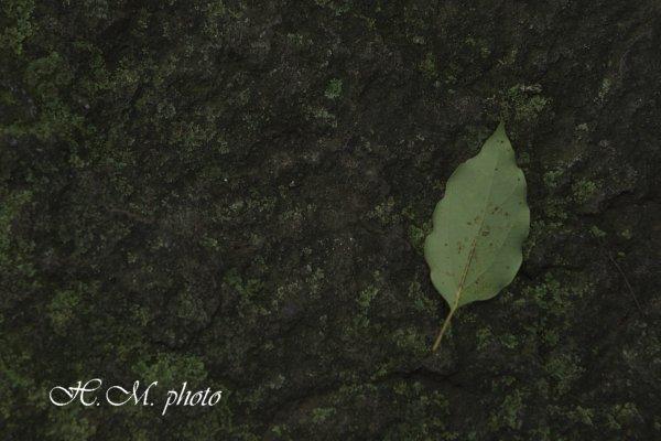2009_聖福寺_08.jpg