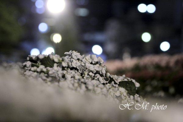 2009_長崎あじさいまつり2_07.jpg