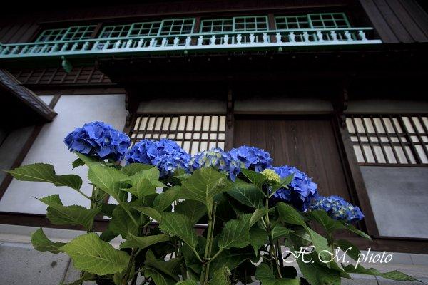 2009_長崎あじさいまつり3_02.jpg