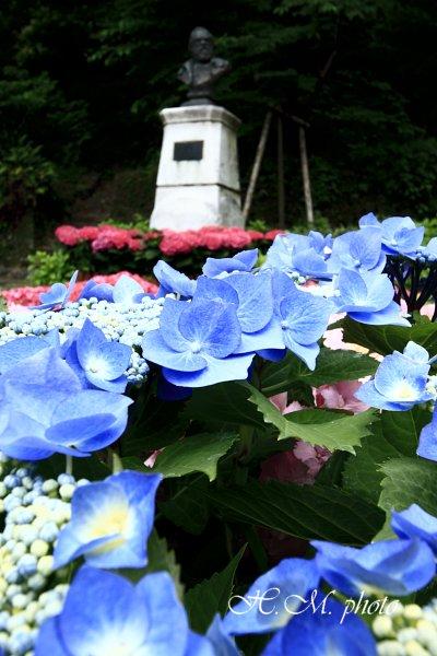 2009_長崎あじさいまつり3_04.jpg