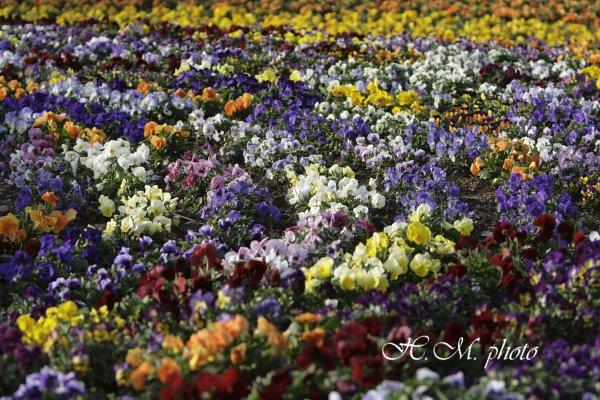 2009_長崎県亜熱帯植物園_04.jpg