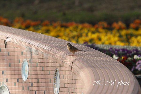 2009_長崎県亜熱帯植物園_07.jpg