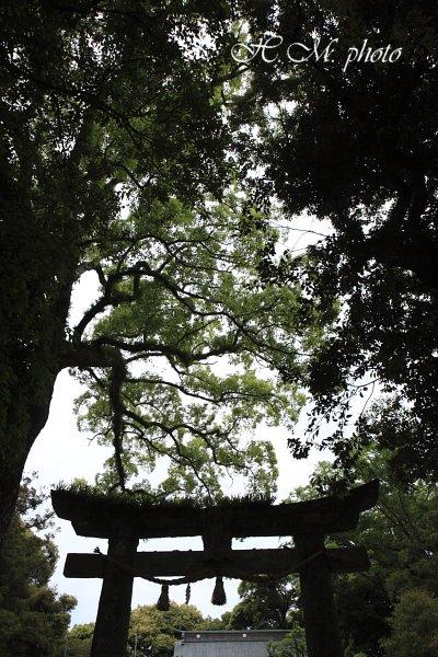 2009_阿蘇神社_03.jpg