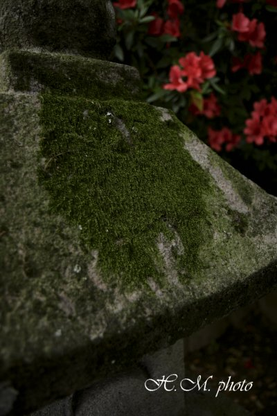 2009_阿蘇神社_04.jpg