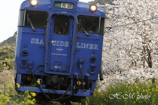 2010_多良見町の桜_01.jpg