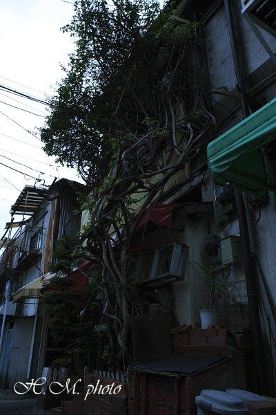 2010_大黒市場_06.jpg