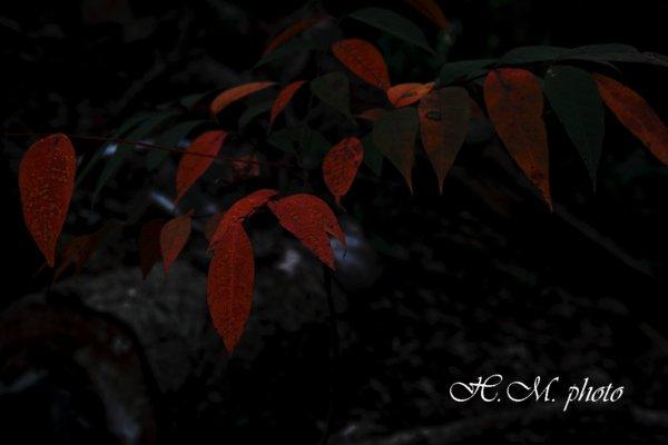 2010_熊野神社_08.jpg
