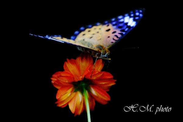 2010_蝶の宙返り_01.jpg