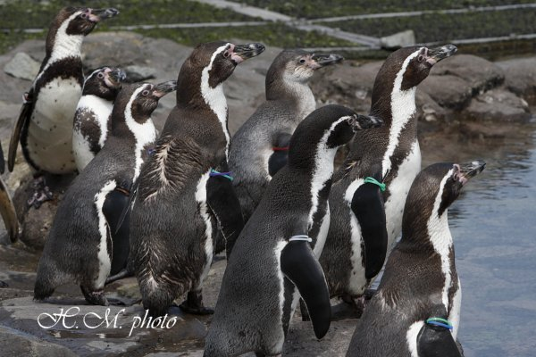 2010_長崎ペンギン水族館_03.jpg