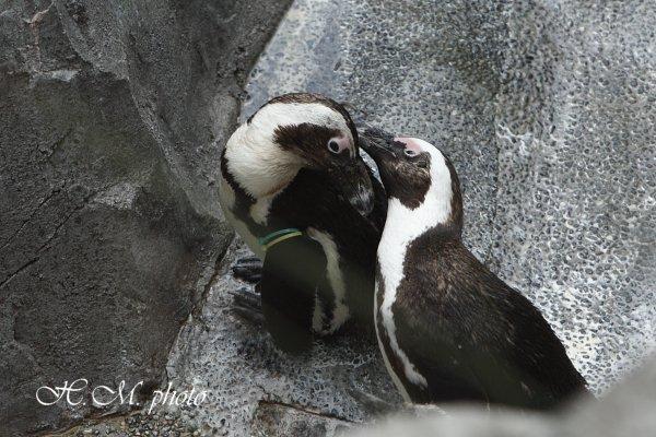 2010_長崎ペンギン水族館_04.jpg