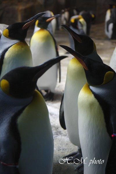 2010_長崎ペンギン水族館_05.jpg