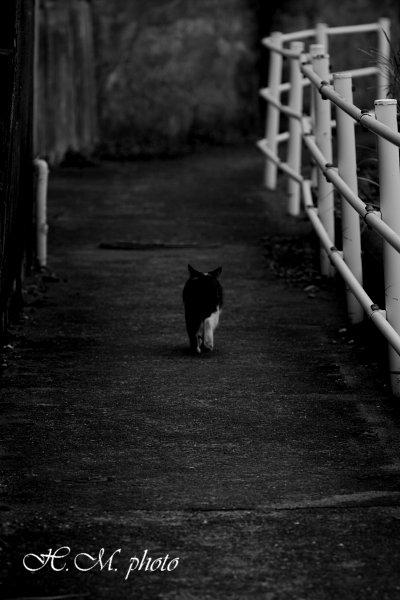 2010_龍馬の道_02.jpg