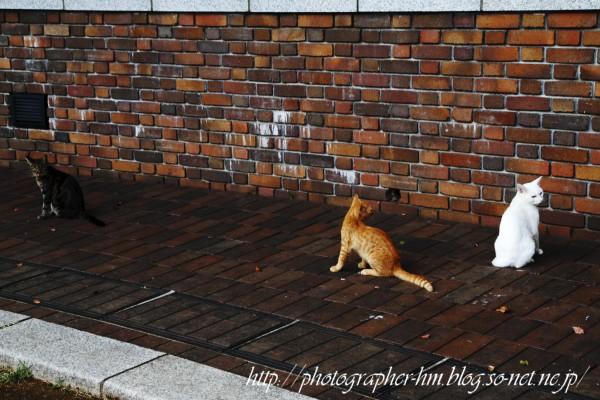 2011_待ちくたびれる猫達_05.jpg
