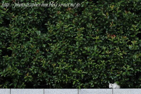 2011_昼寝の時間_01.jpg