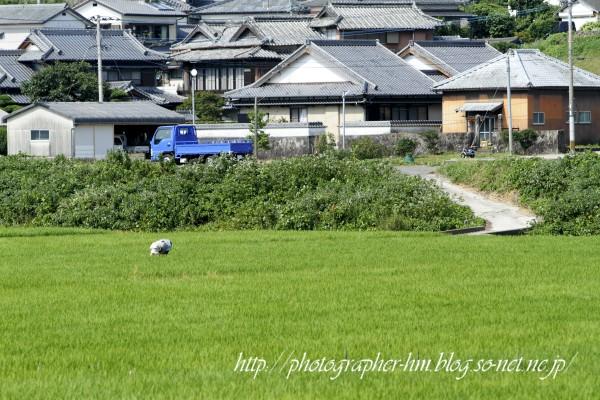 2011_諫早市高来町の農作業_02.jpg