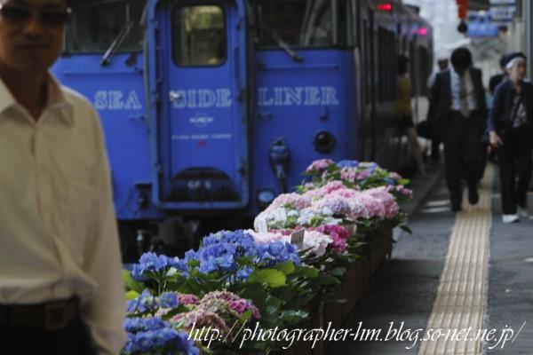 2012_ながさき紫陽花(おたくさ)まつり_02.jpg