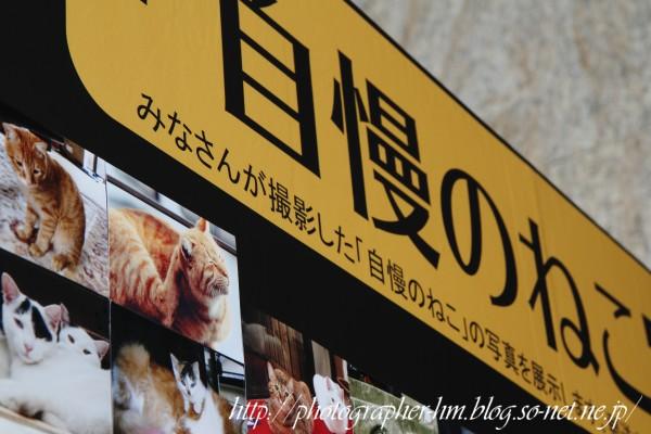 2012_岩合光昭 ねこ写真展_04.jpg