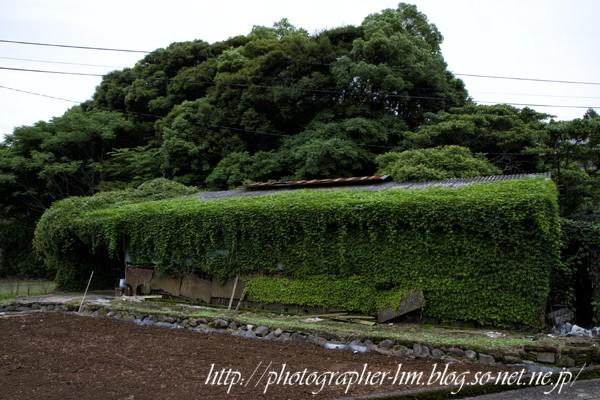 2012_草茂る民家_06.jpg