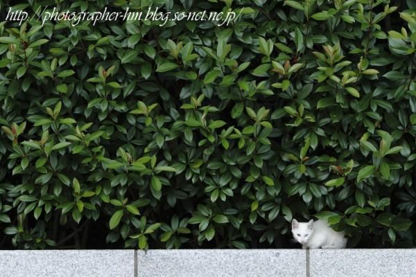 2011_昼寝の時間_02.jpg