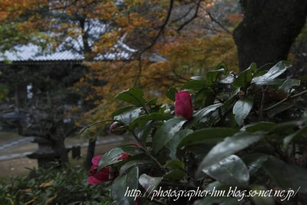 2011_滝の観音_14.jpg