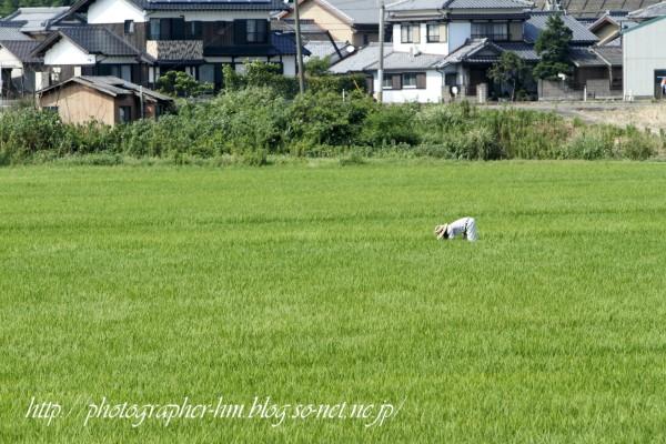 2011_諫早市高来町の農作業_01.jpg