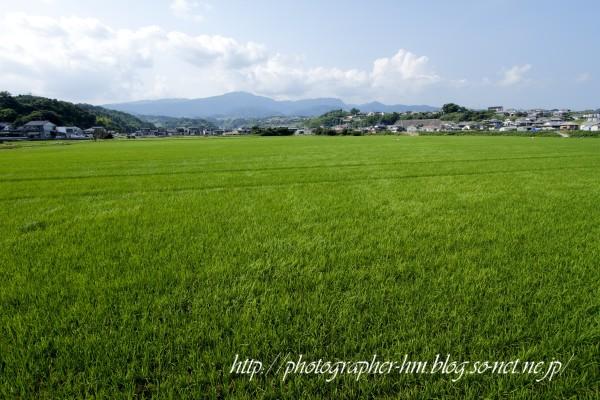 2011_諫早市高来町の農作業_03.jpg