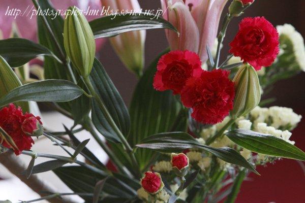 2012_グラバー園の花_03.jpg