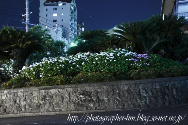 2012_夜に徘徊_05.jpg